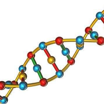 """Estudio de terapia génica en fase pre-clínica mediante """"salto de Exón"""" para mutaciones intrónicas"""